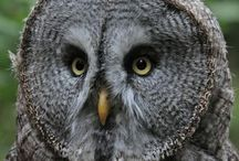 Tell me OWL about it!