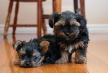 wittle puppiess