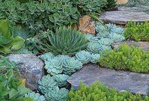 Water friendly garden