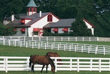 My Old Kentucky Home / by Michelle Steele