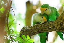 pták a papoušek