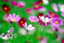 Flowers~Gardens / Flowers-Plants-Trees-Garden Info / by Dee Creations