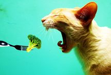Cat Eating With Spoon Funny Photo   Famous HD Wallpaper