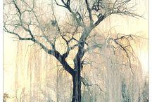 Tree's / Nature
