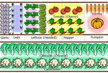 Vegetable gardening / Vegetable gardening