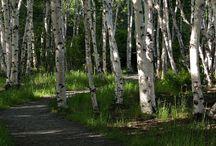 Des branches et des arbres