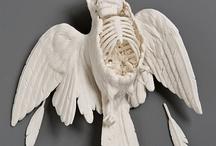Bird carcass