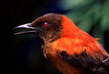 10 Jenis Burung Unik dengan Sistem Pertahanan Terbaik