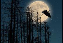 природа-луна