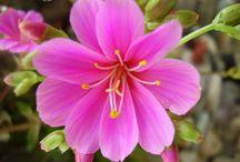 Kukkailoa / Luonnon luomaa kelpaa ihailla.
