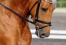 cheval beau