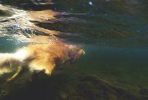 Diving dog / Diving dog