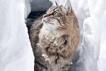 Miisut - Kittycats / Cats, kittens >^.^<