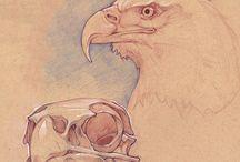 EagleSkulls