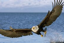 Wonderful Wildlife / Alaska is full of amazing animals!