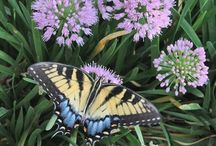 Perennial Plants of the Year