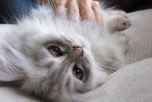 Erik, My Cat