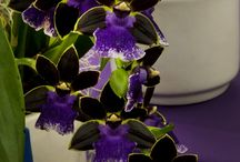 Cactus & Orchids