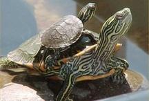 turtles / by Faith Powell
