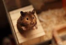 House Mouse / I think if she lived in  A little shoe - house ? Surely a mouse  !