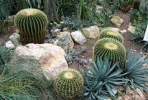 desert landscaping / by Tracie Green