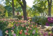 Puutarha/kevät