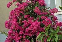 Plants - Xeriscape  / Xeriscape, a plant or grass that is drought-tolerant.