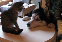 cats and dogs and ...
