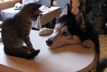 pets for leah