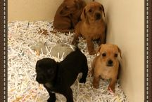 Puppies July 2015 / Puppies we have had during the month of July in the year 2015.