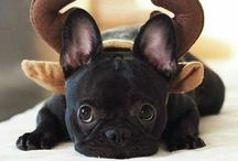 To my Titus at home apage for him  our french bulldog