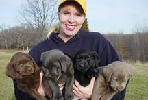 LABRADOR RETRIEVERS!!!!!!!
