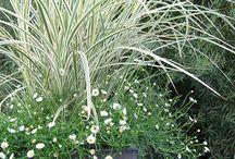 Trawy w donicach