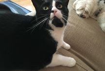 My cat Winnie (or cats who look like her)! / My rescue cat