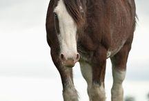 Animals: Horses