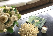Home Interiors with Beautiful Shells and Coral