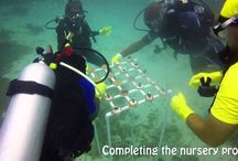 Mabouya Coral Nursery / We are super-excited to see a new coral nursery established at Mabouya this week. Thanks to UNEP for making this wonderful project possible!