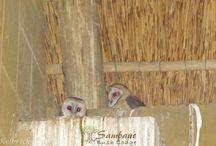 Sambane Bush Lodge Blog / Our Daily Blog