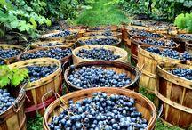 Vineyards inspiration