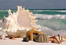 Beach :~) / by Charla Barron