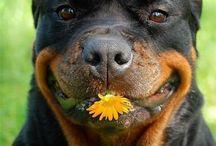 Dogs I Catei I Fluxymedia