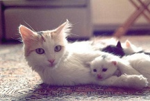 Sweet and Cute Cat`s
