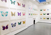 Damien Hirst / A loved and hated modern artist