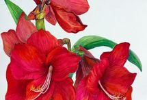 AA blommor