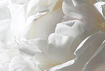 Hues ~ White ❤
