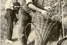 Viticoltura Eroica / Immagini del terroir da cui abbiamo scelto i vini proposti su winetowineclub.it