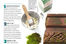 muschio e licheni coltivati