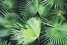 Massif palmiers