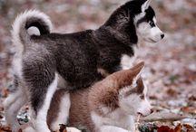 2 cute's dog's