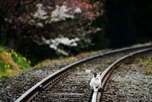 Photography! :)